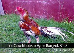 Tips Cara Mandikan Ayam Bangkok S128